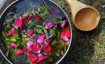 Healing the womb women's dieta with ayahuasca and kambo