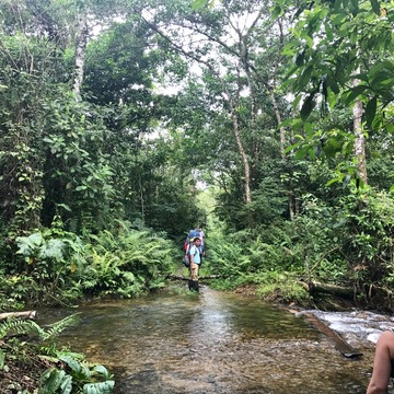 13 Day Ayahuasca and Plant Medicine Retreat in the Upper Amazon