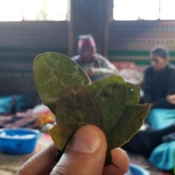 December 1-10, 2019 – 10 Day Ayahuasca Deep Immersion & Integration Program