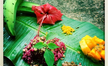 30 Day Ayahuasca and Master Plant Dieta (April 1 - 30 )