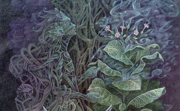Ayahuasca Master Plants Retreat