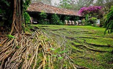 The Healing Path Of The Ancient Maya