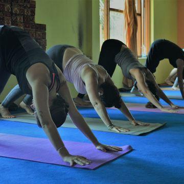 shiva darshan yoga school