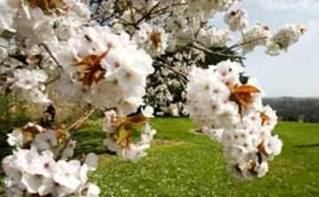 Sharpham House: Spring Unfolding: a 5-night retreat