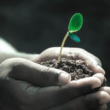 Green Dharma: A Retreat for Ecosattvas