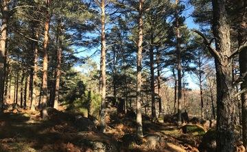 New Year Restorative Nature Week
