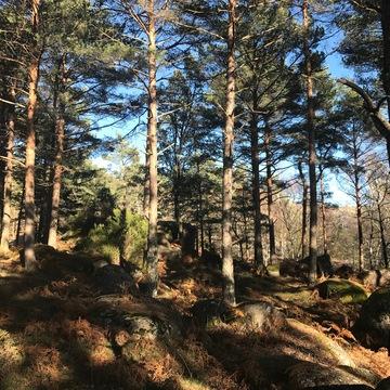 New Year Restorative Nature Week