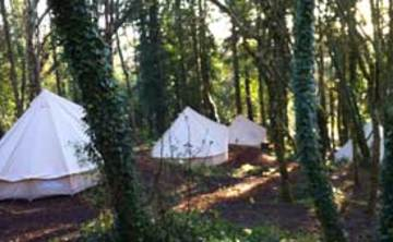 Woodland Retreat: Foraging & connecting with plants (3 nights)