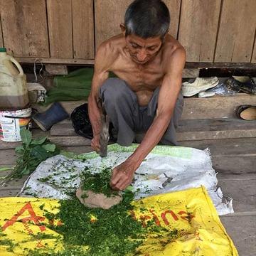Master Plant Isolation Diet
