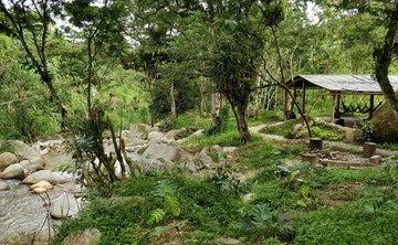 Ayahuasca Healing Retreat Medellin