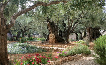 "The Salt of the Earth, "" The Healing School of Salica, Dead Sea- Jordan- Israel, October 2016"