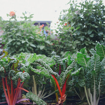 Garden to Table: Cooking & Mindful Movement