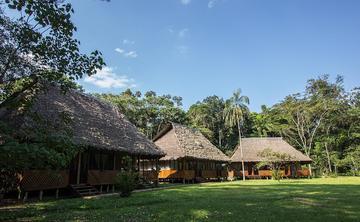 Ayahausca Retreat Amazon Jungle Tambopata Puerto Maldonado Peru (ongoing)
