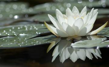 Dream Yoga: Opening to Intuition - 3 Night Yoga Retreat at Yasodhara Ashram in Kootenay Bay, BC