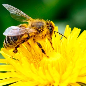 The Bee's Knees Women's Retreat