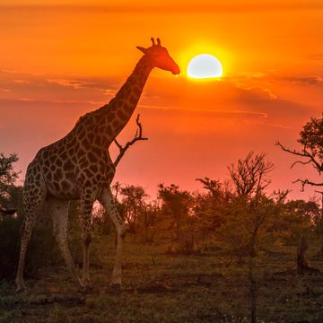 'Fully Alive' Yoga Retreat & Safari in South Africa