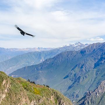 Shamanic Retreat Colca Canyon Arequipa Peru (ongoing)
