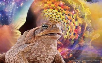 Sacred Ancient Medicines of Rapé & Bufo Alvarius (5-Meo-DMT) & Kundalini  Yoga Activation