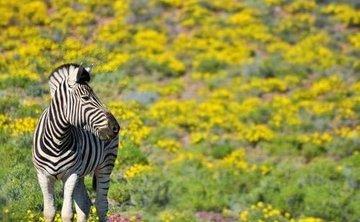 SOUTH AFRICA SAFARI – Jan 3-9, 2020