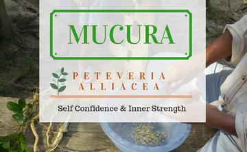 Twelve Day Visionary Ayahuasca Retreat + Mucura