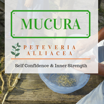 Twelve Day Visionary Ayahuasca Retreat + Mucura