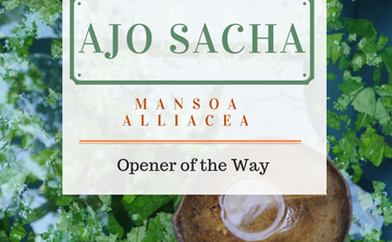 Twelve Day Visionary Ayahuasca Retreat + Ajo Sacha