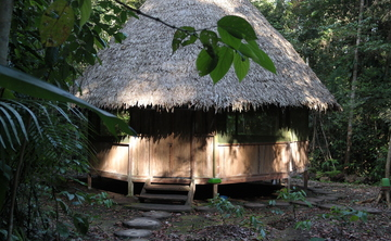 10-days Ayahuasca and San Pedro Retreat