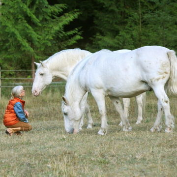 Into the Heart: A Nature Retreat with Horses