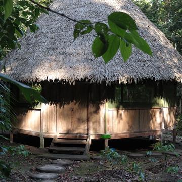 10-days Ayahuasca and San Pedro Retreat