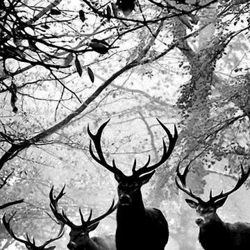 Holistic Hunting Weekend