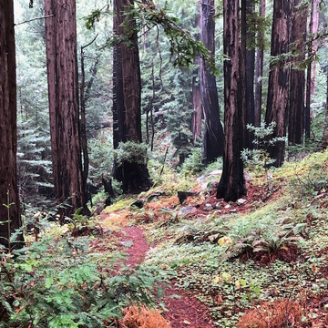 Wild Tao: Hiking and Qi Gong in Big Sur Wilderness