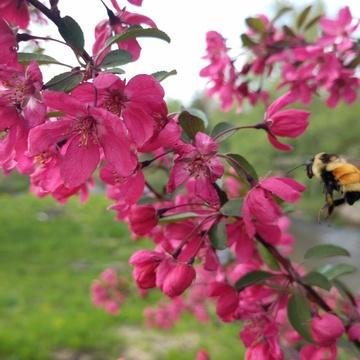 Spring Into Balance: A Weekend of Yoga, Meditation, and Ayurveda