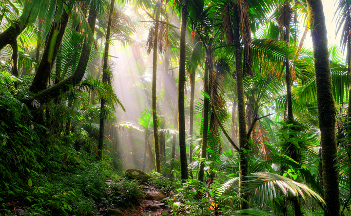 The life-changing dieta: plant medicine at Rainforest Healing Center