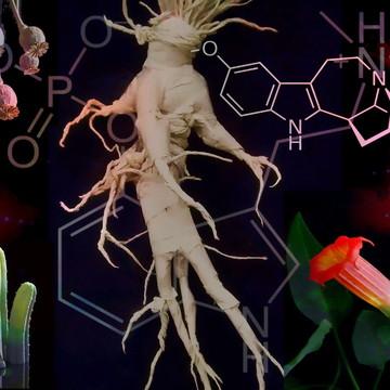 PSYCHOTROPIC PLANTS DIPLOMA