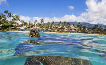 SwellCo-ed Maui Surf & Yoga
