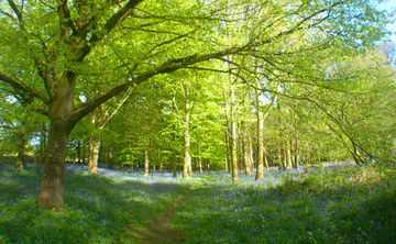 Easter Yoga & Meditation retreat in the stunning Dorset Countryside
