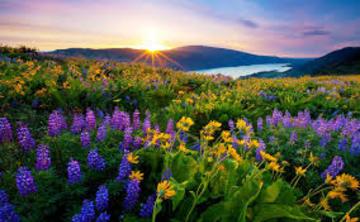 Spring Break for Serenity Seekers