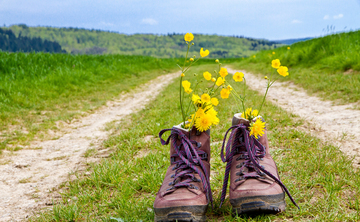 Coaching on the Camino de Santiago - A Walking Life Course III
