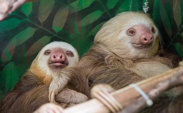 Breath, Body & Biodiversity: An Epic Jungle Retreat Experience in Costa Rica