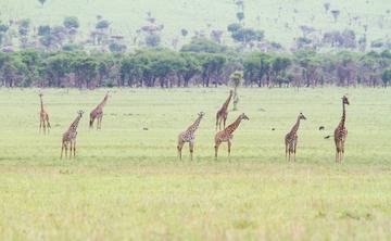 Feel the Heartbeat of Nature Meditation Breathwork Retreat in Tanzania