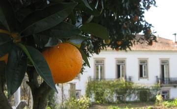 Yoga- Chi Gong- Ayurveda -Retreat in Portugal