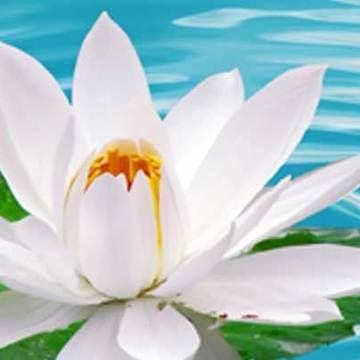 Flores Joyful Retreat