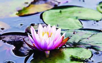 [en:]Certificate Course: Yoga Psychology – The Ancient Path of Raja Yoga to Inner Peace[fr:]Stage certifiant  Psychologie du yoga – de la voie millénaire du raja yoga vers la paix intérieure[:]