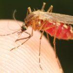 Ocho costarricenses y siete nicaragüenses resultan con malaria en zona fronteriza de Costa Rica