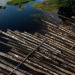 Brasil deforestó más de 1,600 kilómetros cuadrados en la Amozonía durante el mes de julio