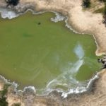 Resuelven el misterio de la muerte de cientos de elefantes en Botsuana