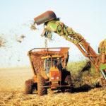 Nicaragua espera producir 17 millones de quintales de azúcar en la próxima zafra que arranca en noviembre