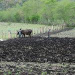 Ausencia de lluvias pone en riesgo siembra de postrera en Madriz y Nueva Segovia