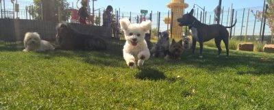 The Hydrant Club: Dog Training, Daycare and Overnight Boarding