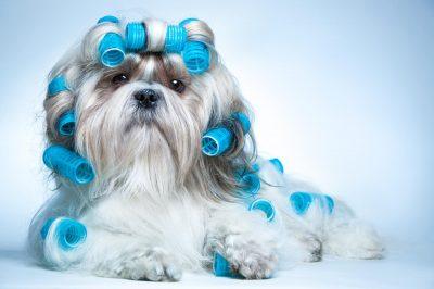 Pet Sitters 【 Las Vegas Area 】 #1 Pet Sitter